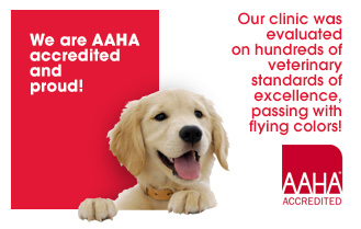 AAHA-Accreditation-Proves-a-Veterinary-Clinics-Voluntary-Pursuit-of-Excellence